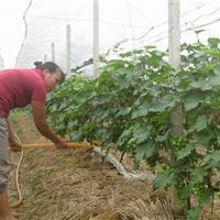 新疆葡萄园专用水泥立柱机