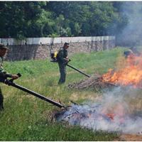 供应黑龙江风力灭火机、森林灭火机专业厂家