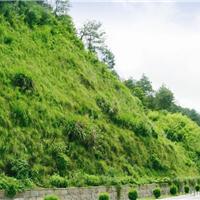 供应煤系土路堑边坡绿化