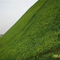 供应网垫植草绿化防护施工