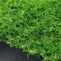 供应人造草坪-塑料仿真草坪-广东人造草坪