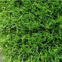 供应2CM全绿细嫩草塑料幼儿园草坪山东草坪