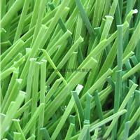 山东足球草-人造草坪-高仿真运动草-可施工