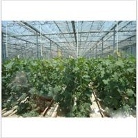 供应瓜果蔬菜大棚及生态智能温室