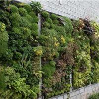 上海墙体绿化植物公司