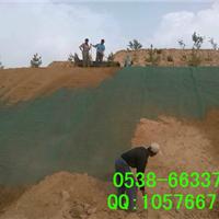 供应三维植被网,边坡植草绿化