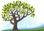 临沂橄榄树木业厂