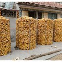 圈玉米网-铁丝网-铁丝网生产厂家