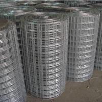 镀锌电焊网厂家