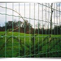 包塑荷兰网-荷兰网护栏网-护栏网厂家