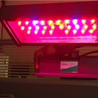 供应北京温室蔬菜补光灯LED植物组培灯