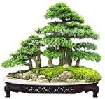 武汉绿林园艺工程有限责任公司