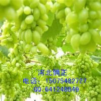 邯郸磁县葡萄架搭架专用热镀锌钢丝