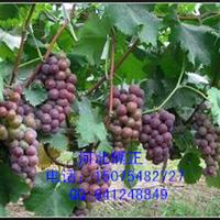 【湖北襄阳葡萄架】专用不生锈热镀锌钢丝