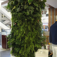 供应四川室内植物墙,成都植物墙公司