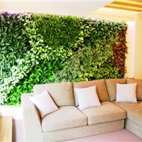 供应成都植物墙,成都植物墙设计施工
