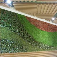 四川专业植物墙公司成都田林环境工程