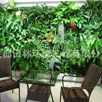 四川成都专业的植物墙及仿真植物墙设计施工