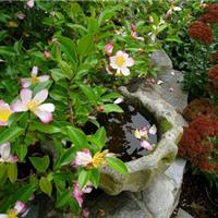 供应武汉别墅私家花园设计英式花园建造