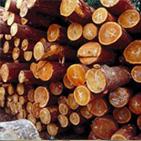 木材防霉防兰变剂 防蓝变剂 防霉剂
