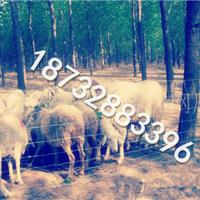 供应工地围栏、铁丝网围栏、草原围栏