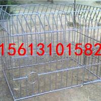 泰安养鸡场用鸡笼子-养动物铁笼子【热门】