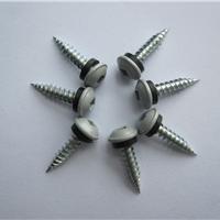 供应不锈钢木螺钉 纤维板钉 干壁钉