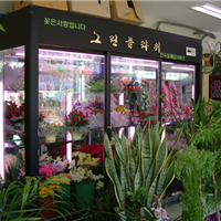 供应鲜花柜,鲜花展示柜