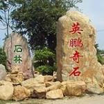 深圳市龙岗区英鹏园林奇石场