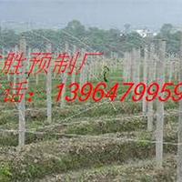 【异形水泥立柱】葡萄架立柱,果树架杆专用