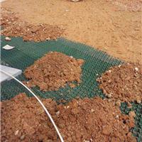 供应龙岩塑料植草格专卖