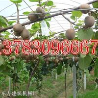 供应贵州猕猴桃架立杆机