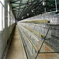 供应黑龙江鸡舍,黑龙江鸡舍板材供应