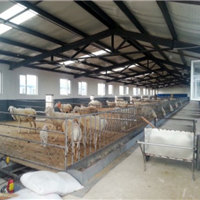 供应内蒙古羊舍,羊舍建设价低质量高