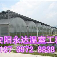 供应开封建造温室专家连栋温室大棚建设厂家