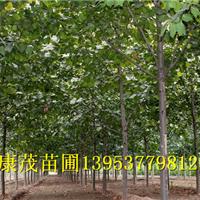 供应10cm法桐绿化用苗报价准确