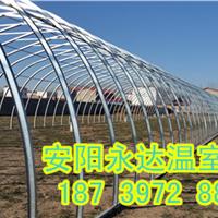 供应郑州建造新型食用菌大棚骨架加工及造价