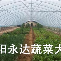 供应商河南商丘新乡无支柱蔬菜大棚安装程序