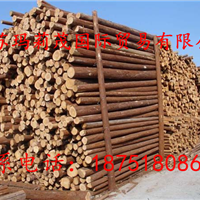 杉木桩.杉木杆.绿化支撑杆.河道护坡木桩