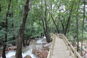 中国第一木塑地板华东苏州塑木地板生态木