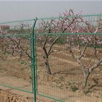 果园护栏网厂家|莱阳果园护栏网