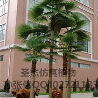 供应定制室内外仿真棕椰树扇葵树仿真树