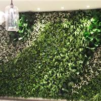 上海室内植物墙