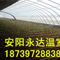 供应开封草莓温室大棚建造钢架蔬菜大棚安装