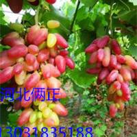 葡萄搭架用的钢丝 安平生产销售热镀锌钢丝