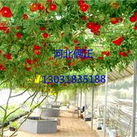 供应蔬菜大棚专用钢丝调直钢丝包塑钢丝