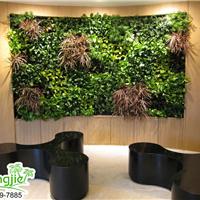 供应定制室内外仿真植物墙草墙墙面绿化装饰