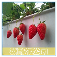 供应草莓基质栽培槽,草莓无土栽培槽