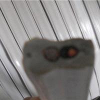 TVVBG20*1.5梅花排列电梯电缆品牌