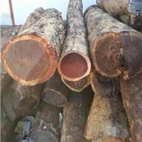 供应血檀原木上海批发非洲赞比亚血檀原木